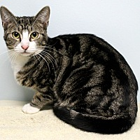 Adopt A Pet :: Jupiter - Montclair, NJ