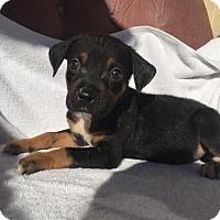 Adopt A Pet :: Harrah - Loganville, GA