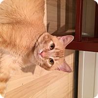 Adopt A Pet :: Garrett (LE) - Little Falls, NJ