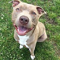 Adopt A Pet :: Lito **$20 adoption fee** - Staten Island, NY