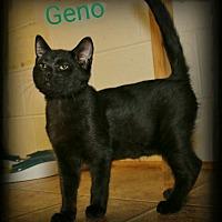 Adopt A Pet :: Geno - Shippenville, PA