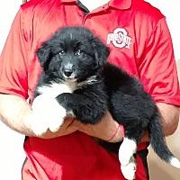 Adopt A Pet :: Roscoe - South Euclid, OH