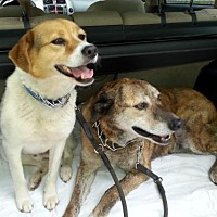 Adopt A Pet :: Scooby and Swirls - Staunton, VA