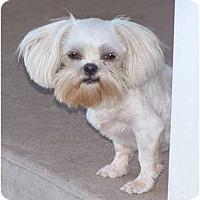 Adopt A Pet :: Cougar - San Angelo, TX