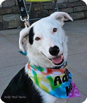 Border Collie Mix Dog for adoption in Baton Rouge, Louisiana - Rocco