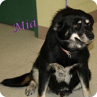 German Shepherd Dog Dog for adoption in Lewisburg, West Virginia - Mia