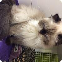 Adopt A Pet :: Dysennia - Beverly Hills, CA