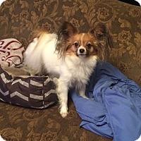 Adopt A Pet :: Penny (Courtesy listing) - Gig Harbor, WA