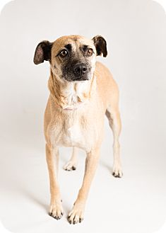 Terrier (Unknown Type, Medium) Mix Dog for adoption in Hendersonville, North Carolina - Buster