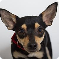 Adopt A Pet :: Schroeder - Mission Viejo, CA