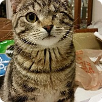 Adopt A Pet :: Sparks - Port Republic, MD
