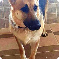 Adopt A Pet :: I'M ADOPTED Teagen - Oswego, IL