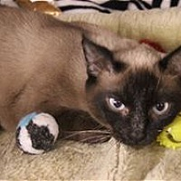 Adopt A Pet :: Penny - Raleigh, NC