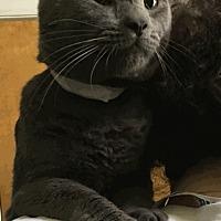 Adopt A Pet :: B.B. - Stroudsburg, PA