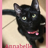 Adopt A Pet :: Annabelle - Glendale, AZ