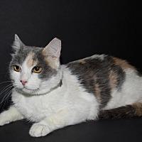Adopt A Pet :: Pinky - Pasadena, CA