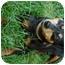 Photo 4 - Miniature Pinscher Mix Dog for adoption in Appleton, Wisconsin - Gretta