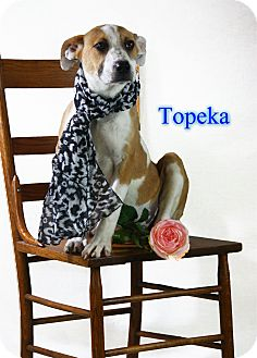 Labrador Retriever Mix Dog for adoption in muskogee, Oklahoma - topeka