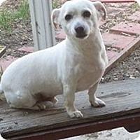Adopt A Pet :: JJ & Max--A Par - Toluca Lake, CA