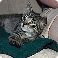 Adopt A Pet :: Taffy (LE) - Little Falls, NJ