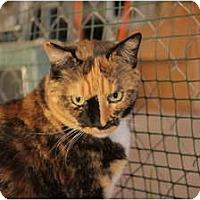 Adopt A Pet :: Chloe - Jenkintown, PA