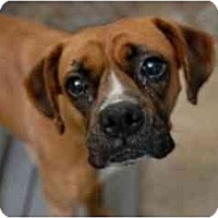 Adopt A Pet :: Suki - Brunswick, GA
