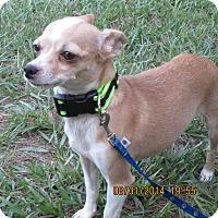 Adopt A Pet :: Peta - Jacksonville, FL