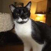 Adopt A Pet :: Harpo Marx - Mission Viejo, CA