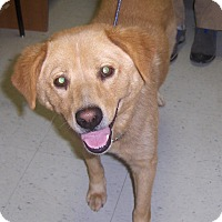 Adopt A Pet :: Parker - New Canaan, CT