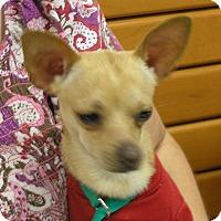 Adopt A Pet :: Ziggy - Weatherford, TX