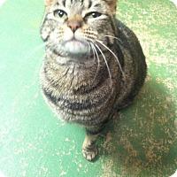Adopt A Pet :: Mela - Frankenmuth, MI