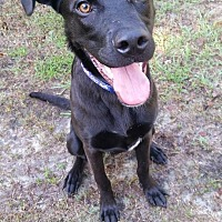 Adopt A Pet :: Hunter - Rocky Point, NC