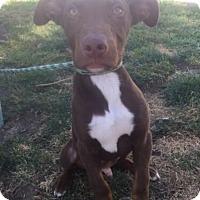 Adopt A Pet :: Bandit - Brea, CA
