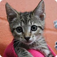 Adopt A Pet :: Darren - Sarasota, FL