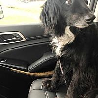 Adopt A Pet :: Remi - Madison, WI