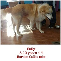 Border Collie Mix Dog for adoption in Hagerstown, Maryland - Sally