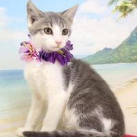 Adopt A Pet :: Anastasia - Harrisonburg, VA