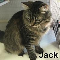 Adopt A Pet :: Jack - Olympia, WA