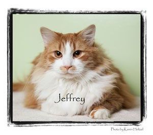 Domestic Longhair Cat for adoption in Warren, Pennsylvania - Jeffrey