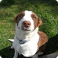Adopt A Pet :: Lucy - Jerome, ID