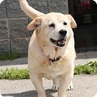 Adopt A Pet :: Janie (Perfect Pooch) - Staunton, VA