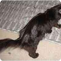 Adopt A Pet :: Denzel - Arlington, VA