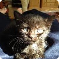 Adopt A Pet :: Olive - East Hanover, NJ