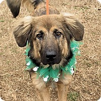 Adopt A Pet :: Angus - in Maine - kennebunkport, ME