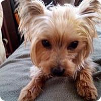 Adopt A Pet :: Shadow - Bunnell, FL