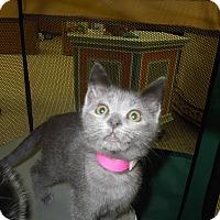Adopt A Pet :: Tiana - Medina, OH
