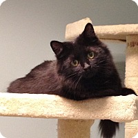 Adopt A Pet :: Kelly Anne - Byron Center, MI