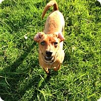 Adopt A Pet :: Preston - Homewood, AL