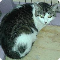 Adopt A Pet :: Lola - Whittier, CA