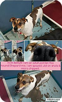 Pointer/Foxhound Mix Dog for adoption in North Pole, Alaska - Betty